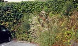 雑草の伐採作業実例(ツタやススキなどが生い茂る駐車場)