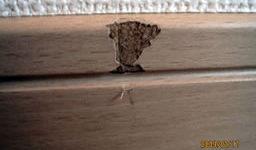 幅木の損傷個所