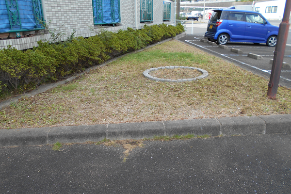 除草作業後のマンション植栽