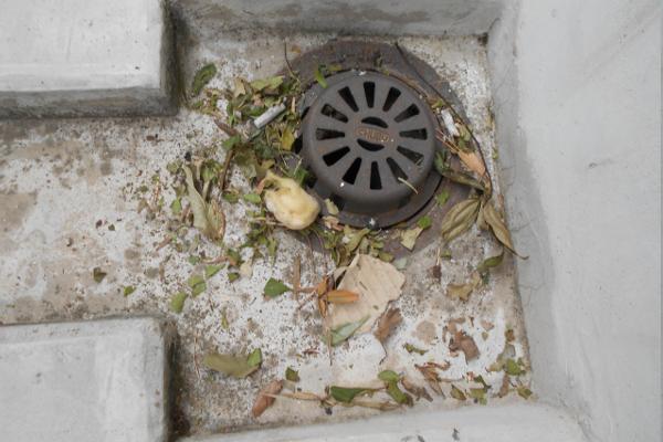 落ち葉で詰まった排水口